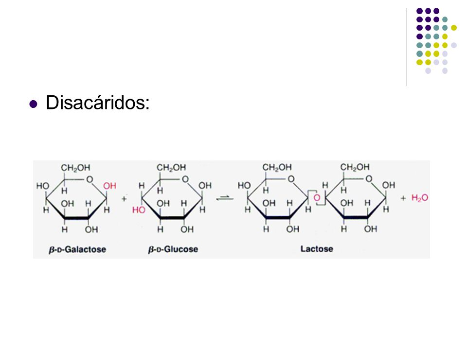 Disacáridos: