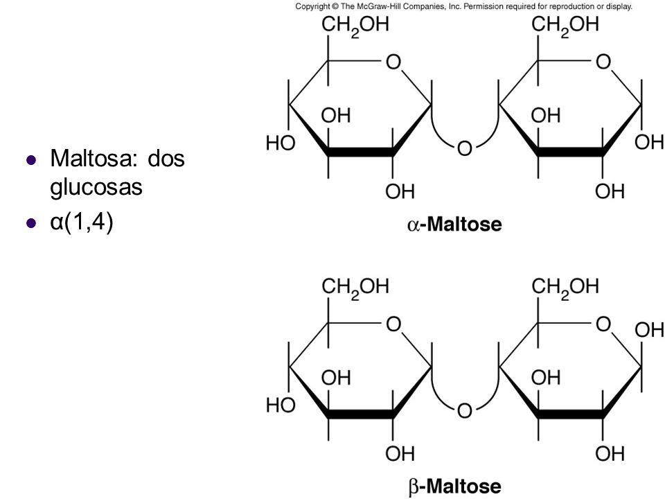 Maltosa: dos glucosas α(1,4)