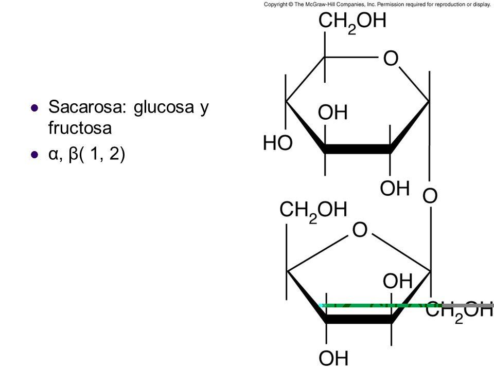 Sacarosa: glucosa y fructosa
