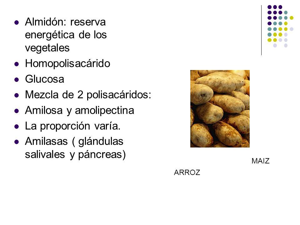 Almidón: reserva energética de los vegetales