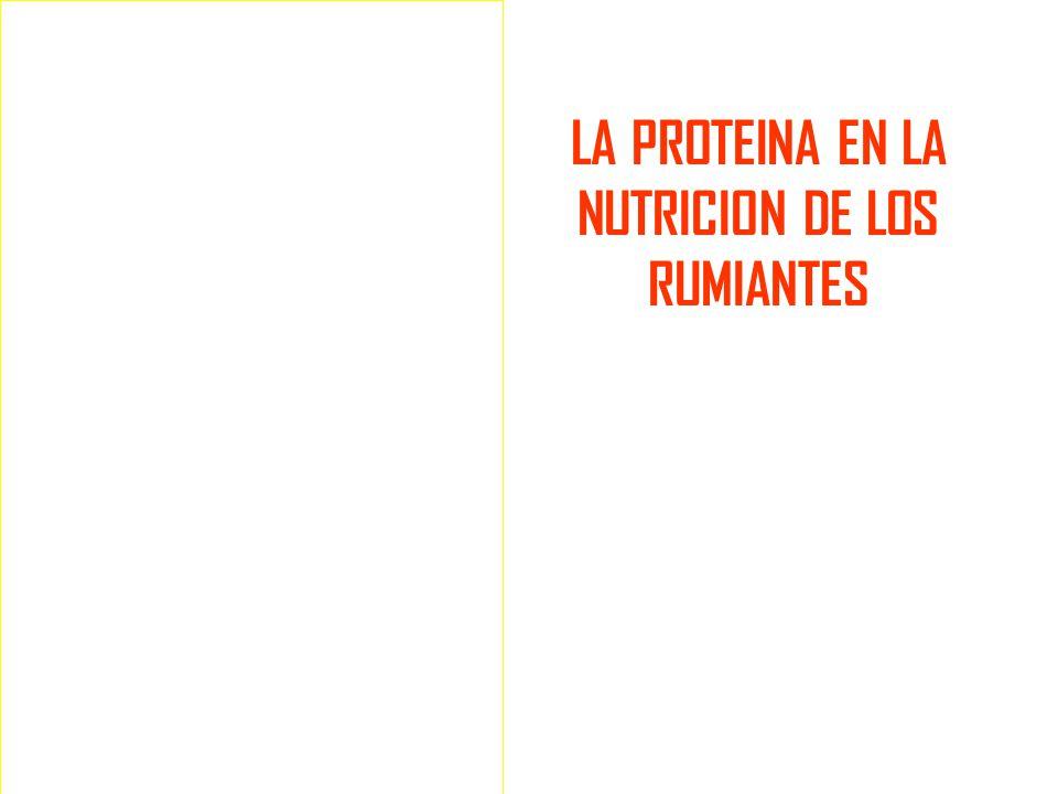 LA PROTEINA EN LA NUTRICION DE LOS RUMIANTES