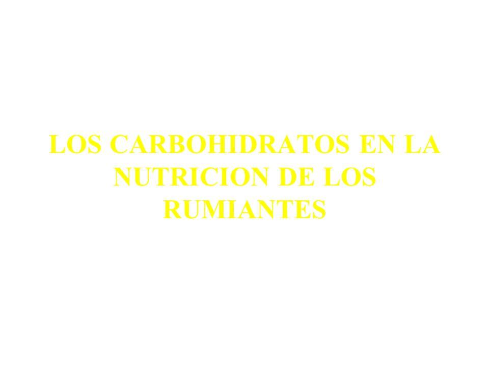 LOS CARBOHIDRATOS EN LA NUTRICION DE LOS RUMIANTES