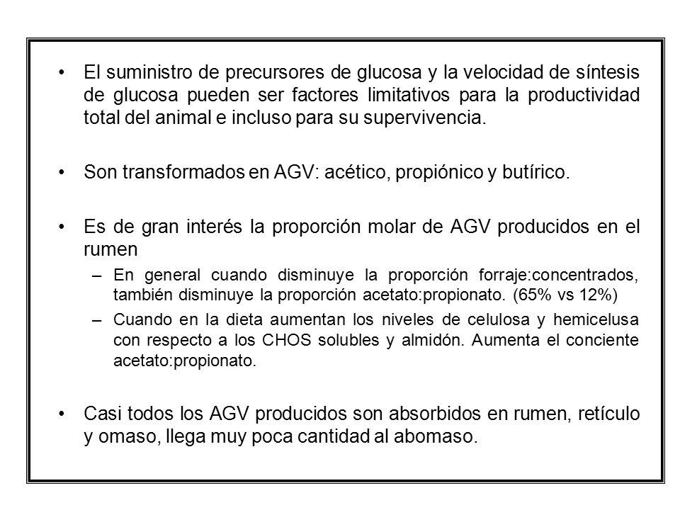 Son transformados en AGV: acético, propiónico y butírico.