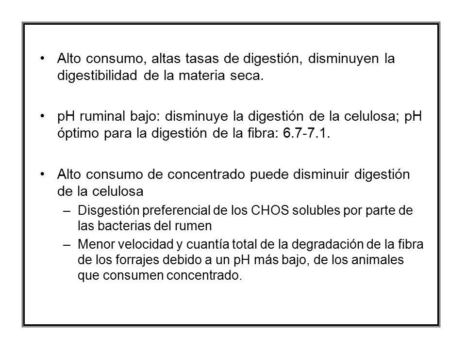 Alto consumo de concentrado puede disminuir digestión de la celulosa