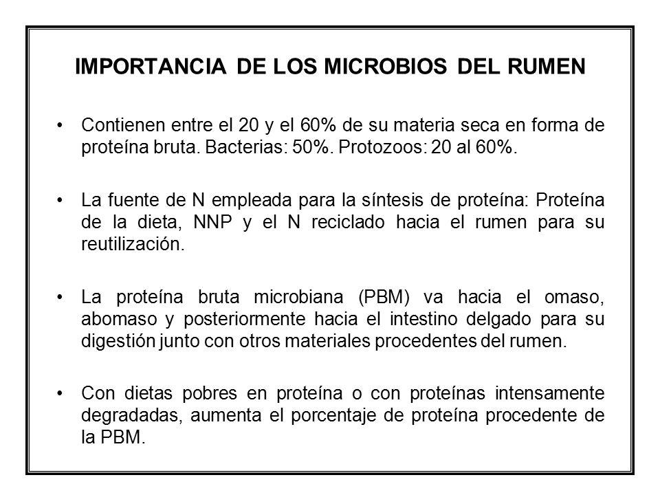 IMPORTANCIA DE LOS MICROBIOS DEL RUMEN