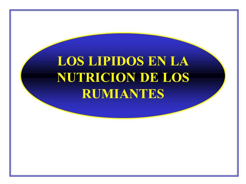 LOS LIPIDOS EN LA NUTRICION DE LOS RUMIANTES