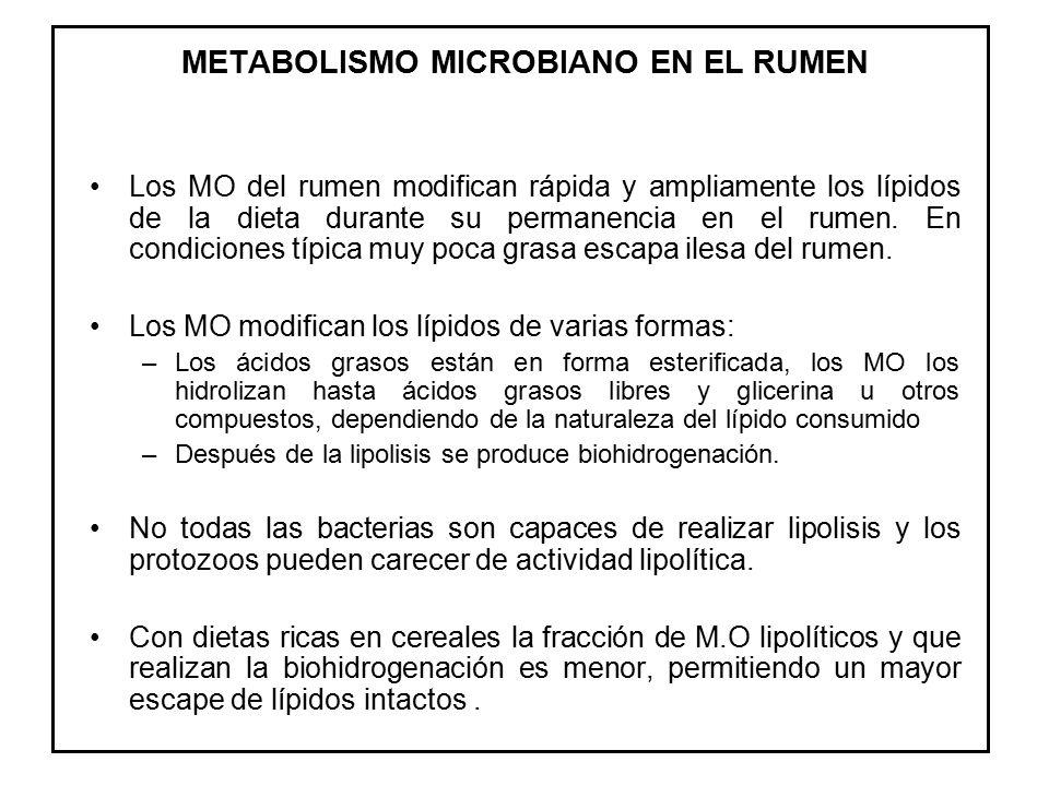 METABOLISMO MICROBIANO EN EL RUMEN
