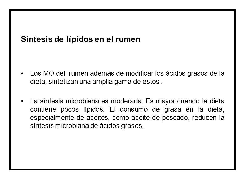 Síntesis de lípidos en el rumen