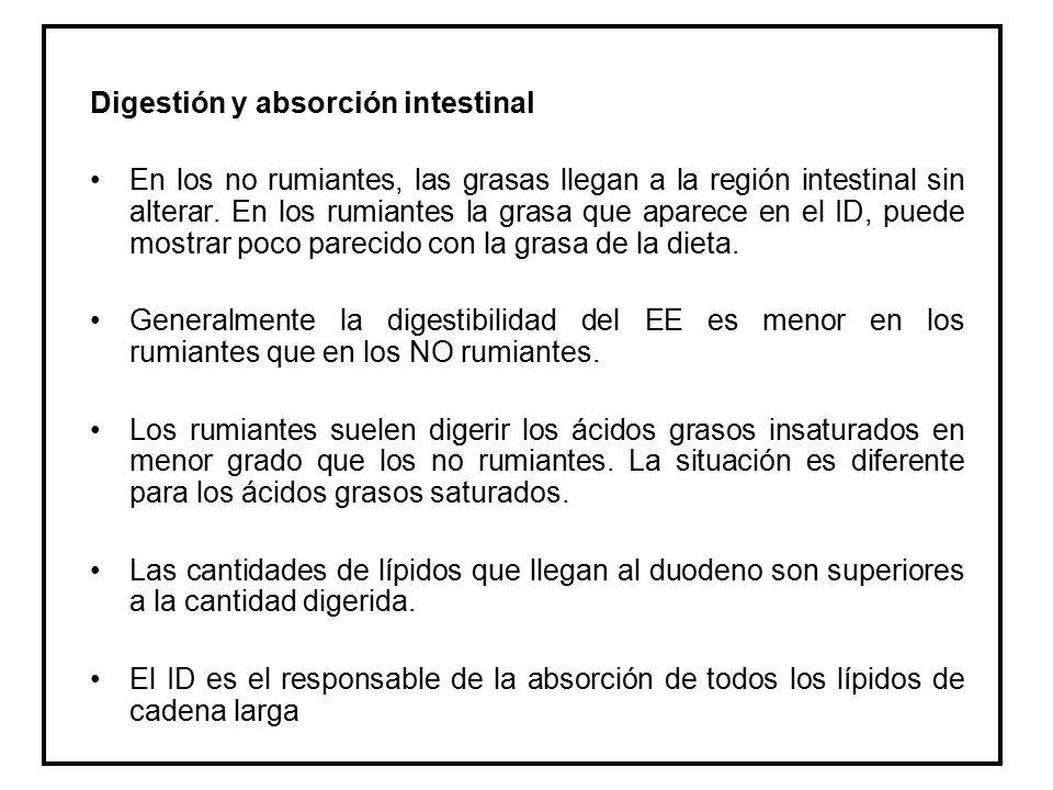Digestión y absorción intestinal