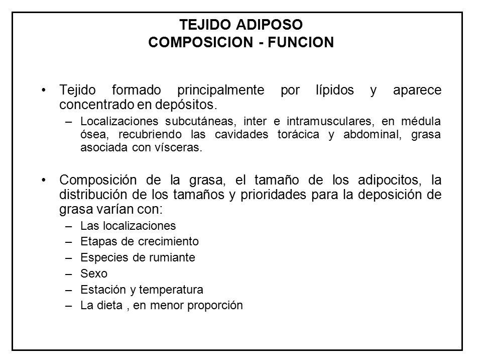 TEJIDO ADIPOSO COMPOSICION - FUNCION