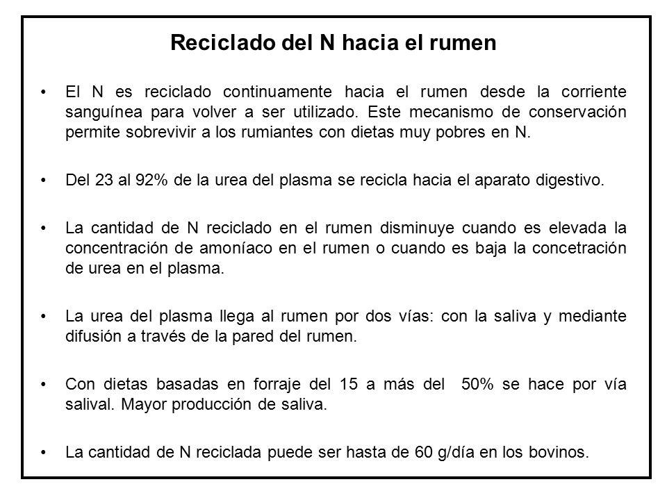 Reciclado del N hacia el rumen
