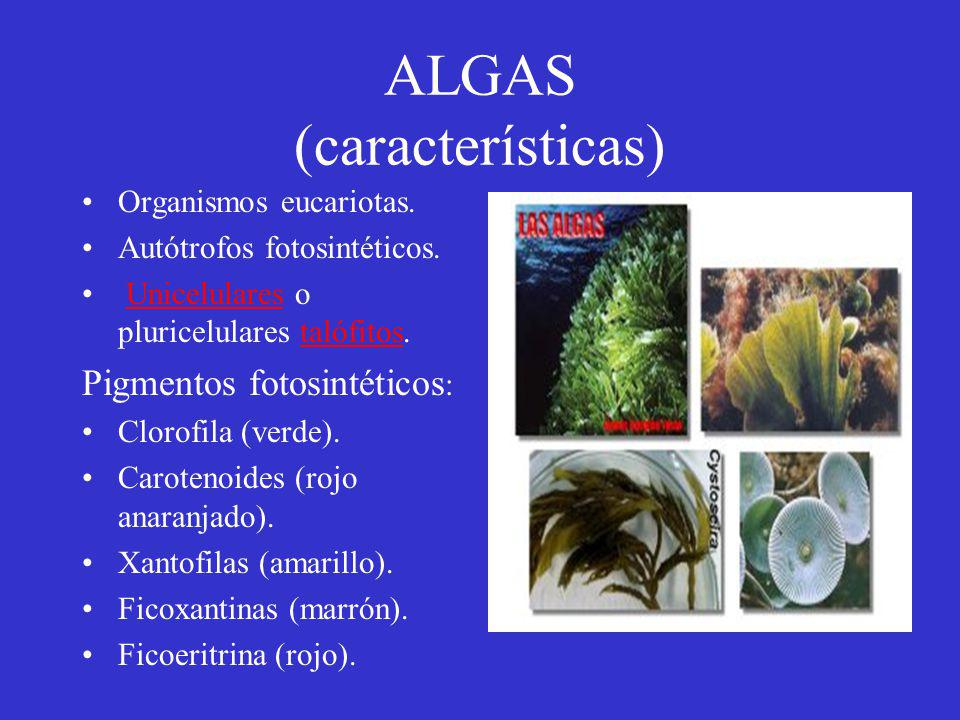 ALGAS (características)