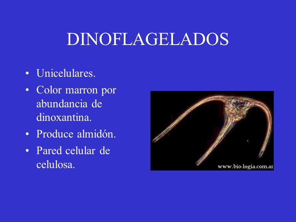 DINOFLAGELADOS Unicelulares.