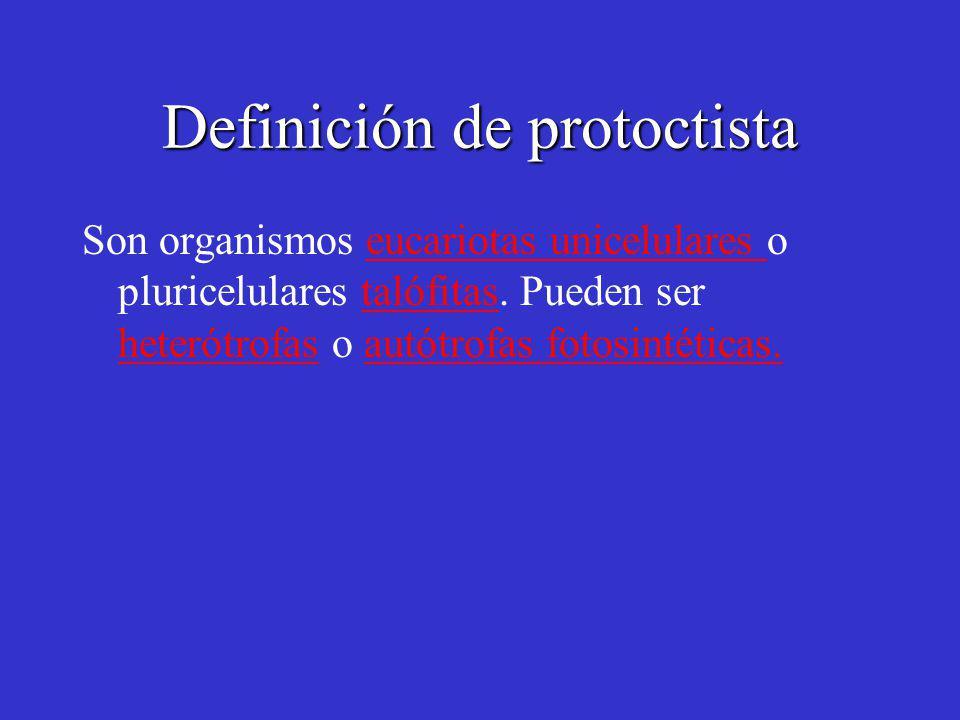 Definición de protoctista