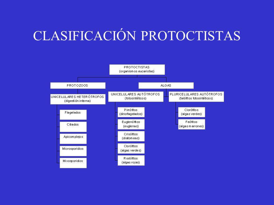 CLASIFICACIÓN PROTOCTISTAS