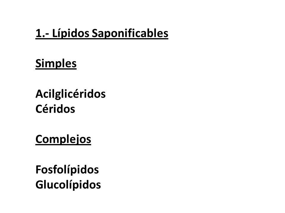 1.- Lípidos Saponificables
