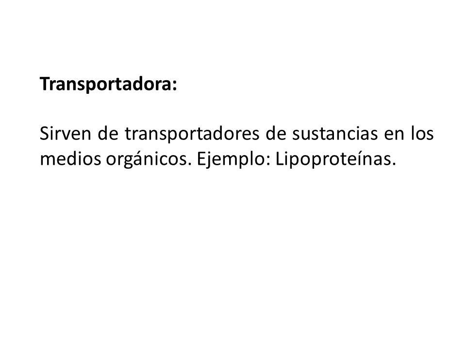 Transportadora: Sirven de transportadores de sustancias en los medios orgánicos.