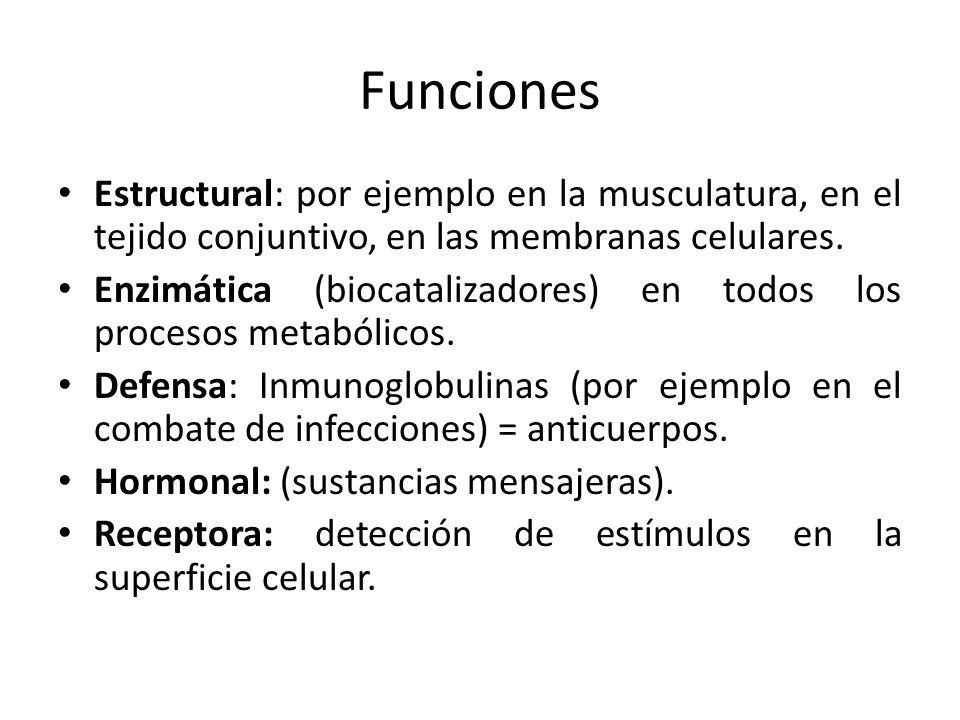 Funciones Estructural: por ejemplo en la musculatura, en el tejido conjuntivo, en las membranas celulares.