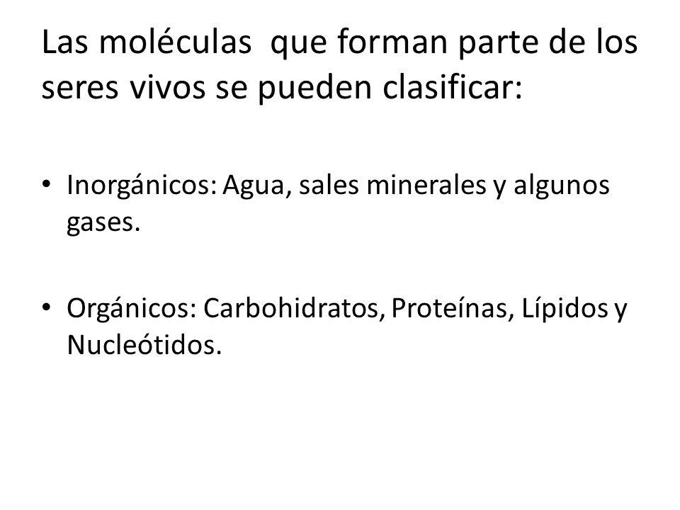 Las moléculas que forman parte de los seres vivos se pueden clasificar: