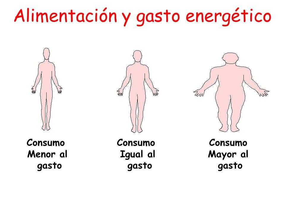 Alimentación y gasto energético
