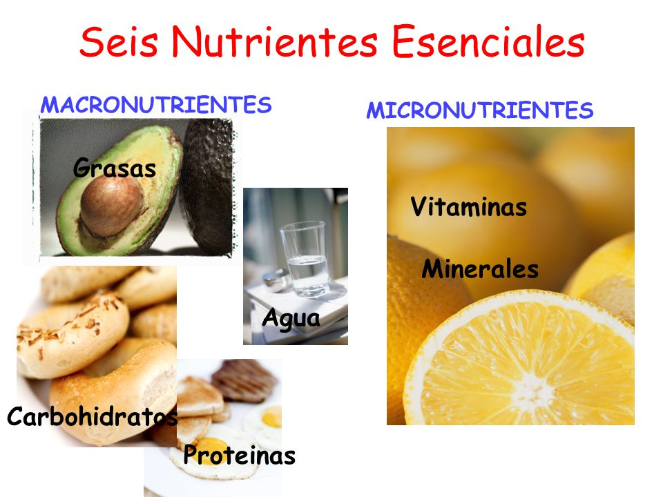 Seis Nutrientes Esenciales