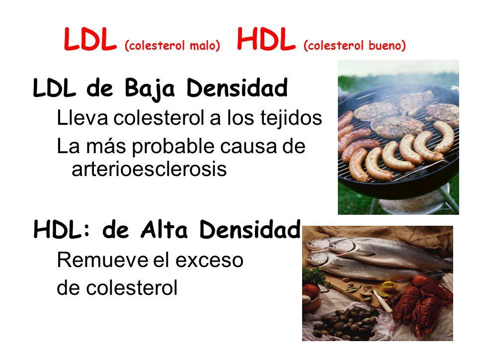 LDL (colesterol malo) HDL (colesterol bueno)