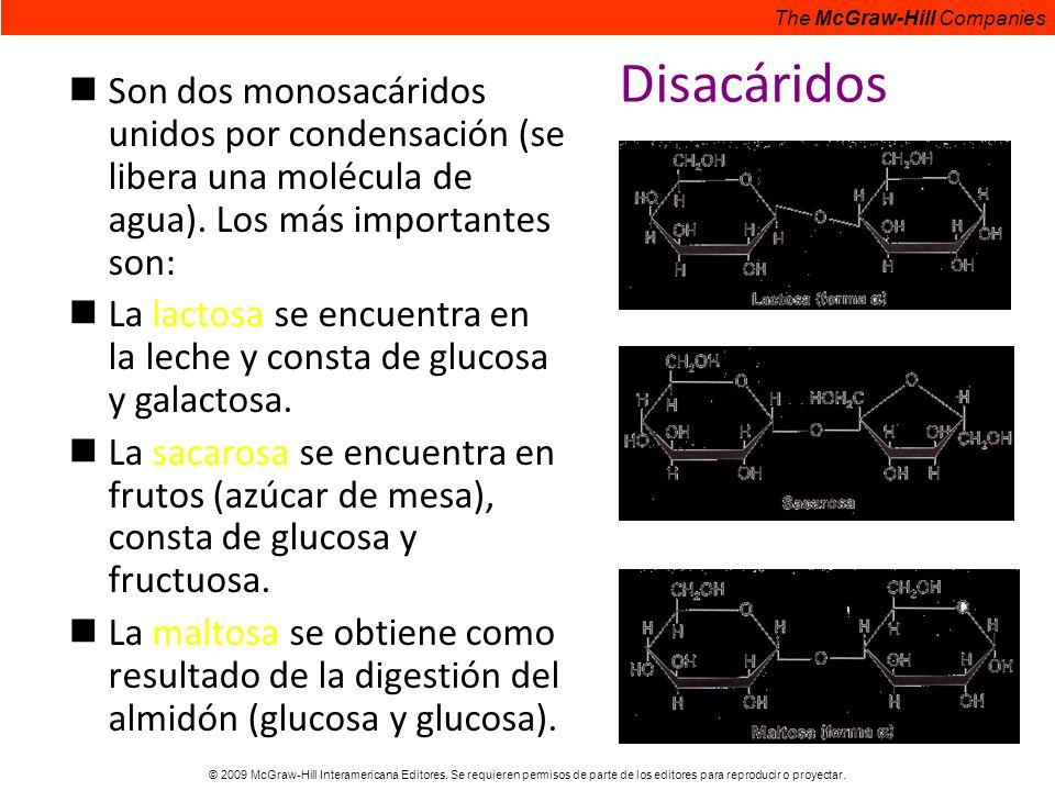 Disacáridos Son dos monosacáridos unidos por condensación (se libera una molécula de agua). Los más importantes son: