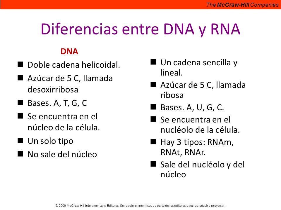 Diferencias entre DNA y RNA