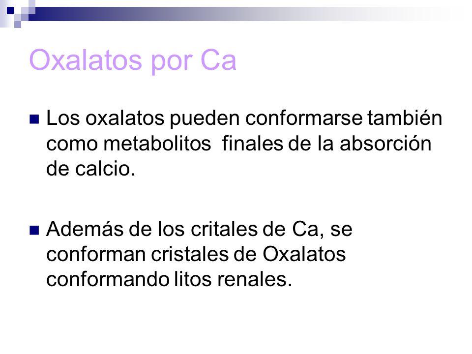 Oxalatos por Ca Los oxalatos pueden conformarse también como metabolitos finales de la absorción de calcio.