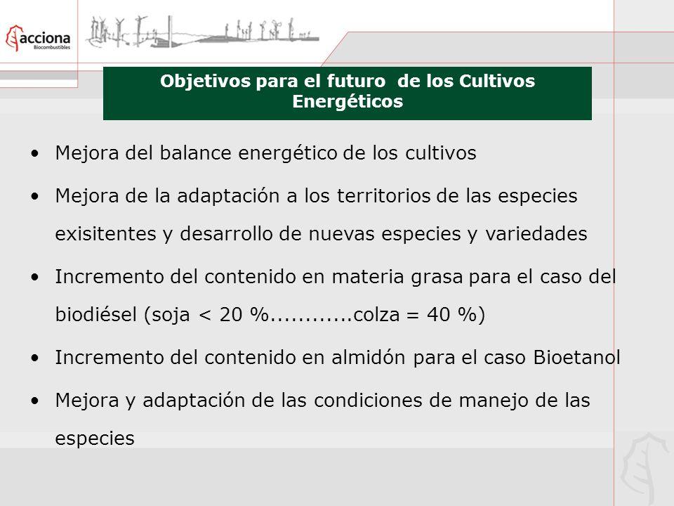 Objetivos para el futuro de los Cultivos Energéticos