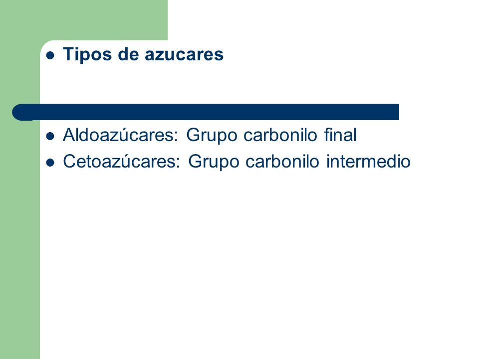 Tipos de azucares Aldoazúcares: Grupo carbonilo final Cetoazúcares: Grupo carbonilo intermedio