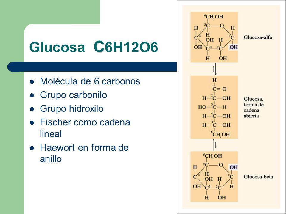 Glucosa C6H12O6 Molécula de 6 carbonos Grupo carbonilo Grupo hidroxilo
