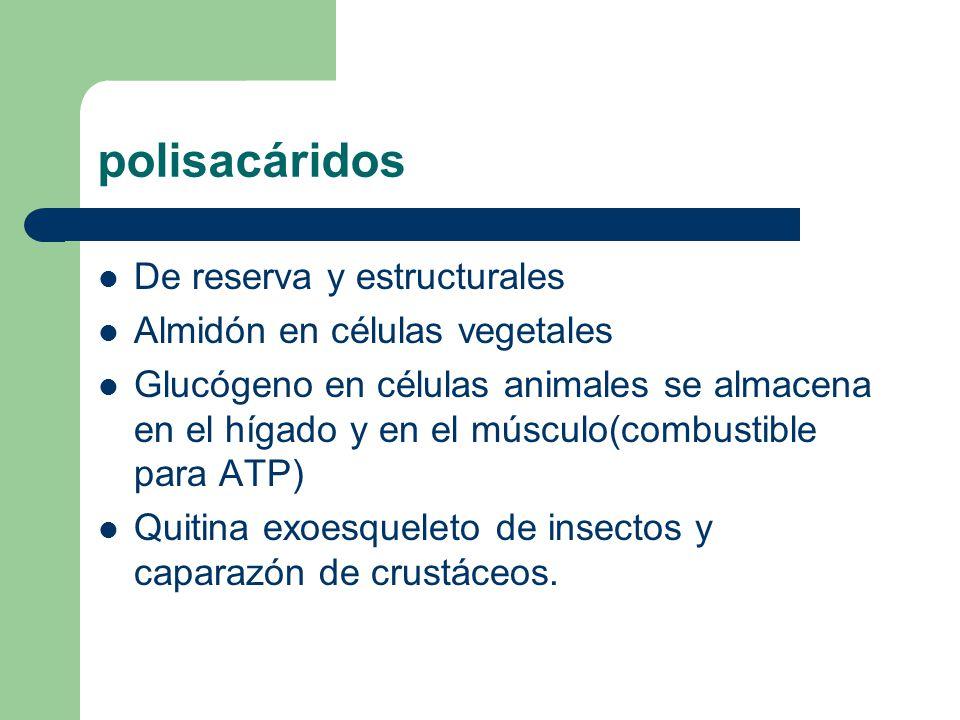 polisacáridos De reserva y estructurales Almidón en células vegetales