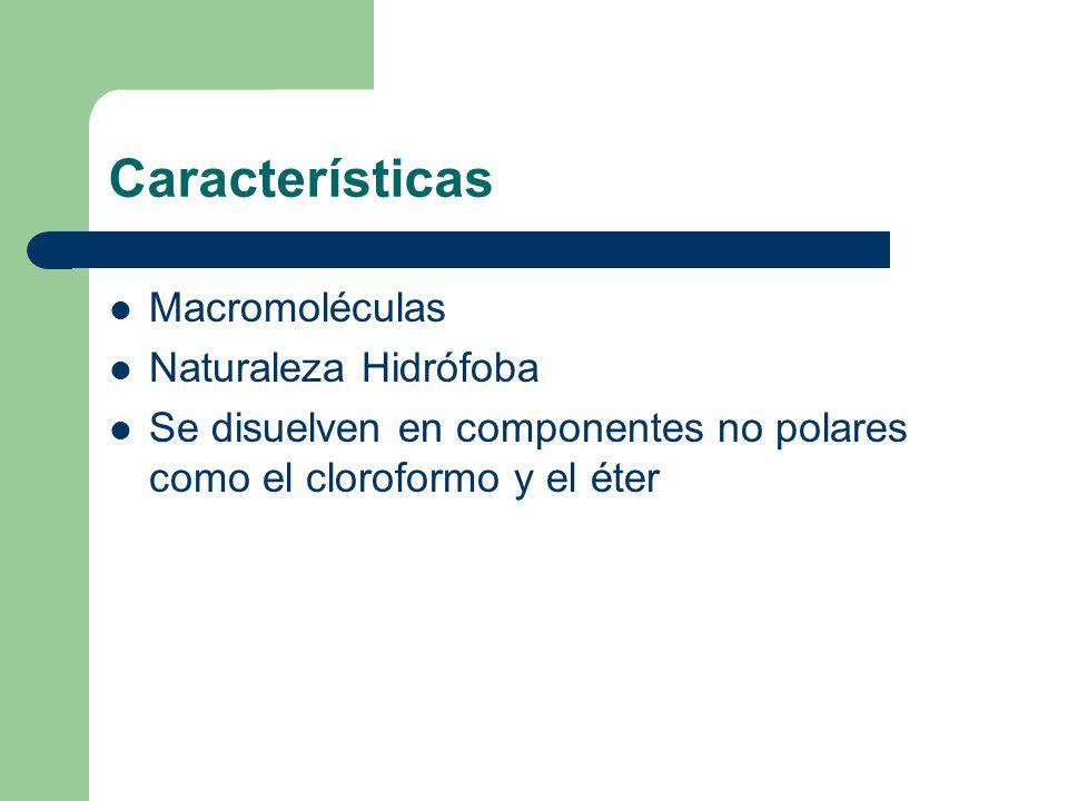 Características Macromoléculas Naturaleza Hidrófoba