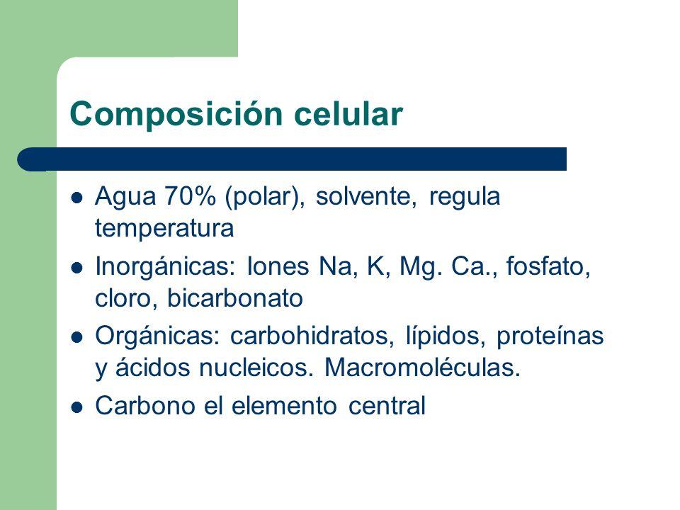 Composición celular Agua 70% (polar), solvente, regula temperatura