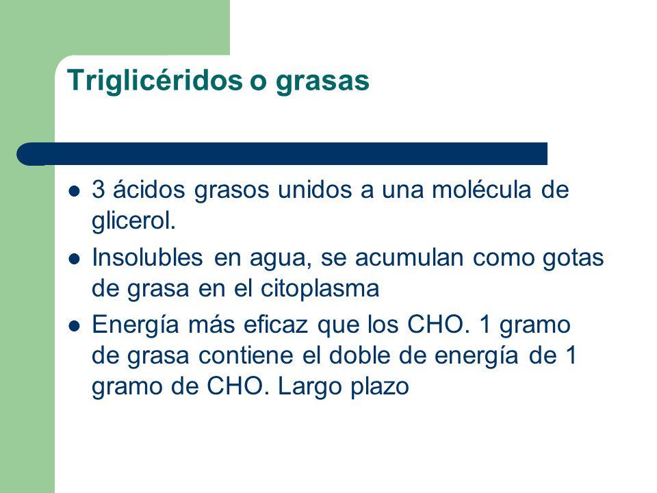 Triglicéridos o grasas