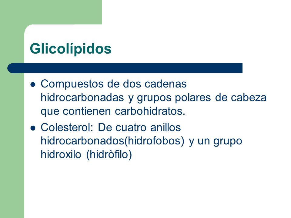 Glicolípidos Compuestos de dos cadenas hidrocarbonadas y grupos polares de cabeza que contienen carbohidratos.