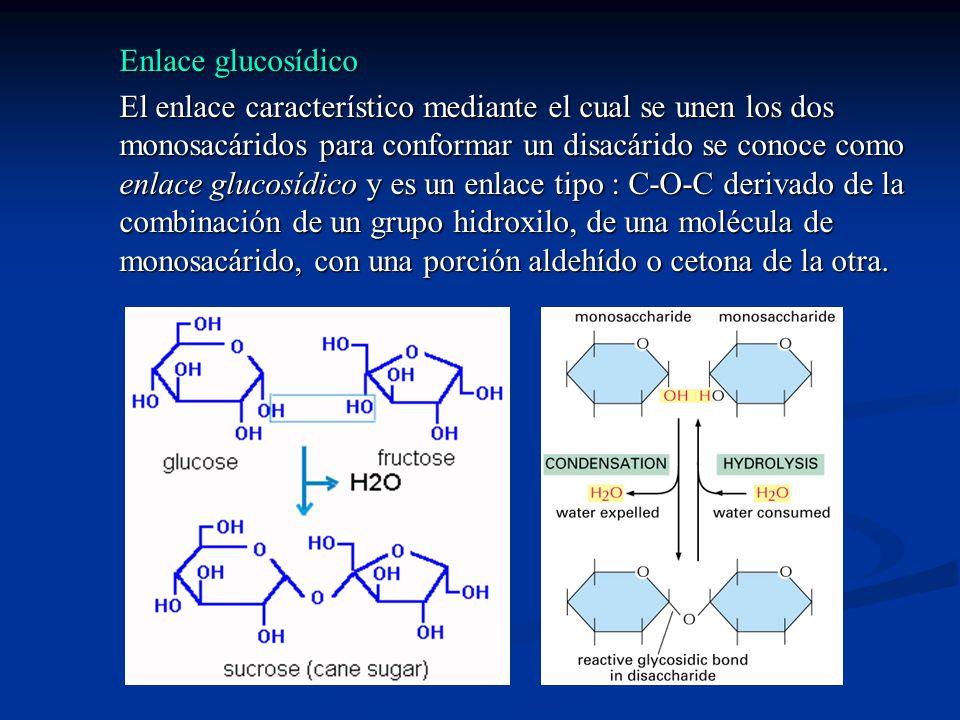 Enlace glucosídico