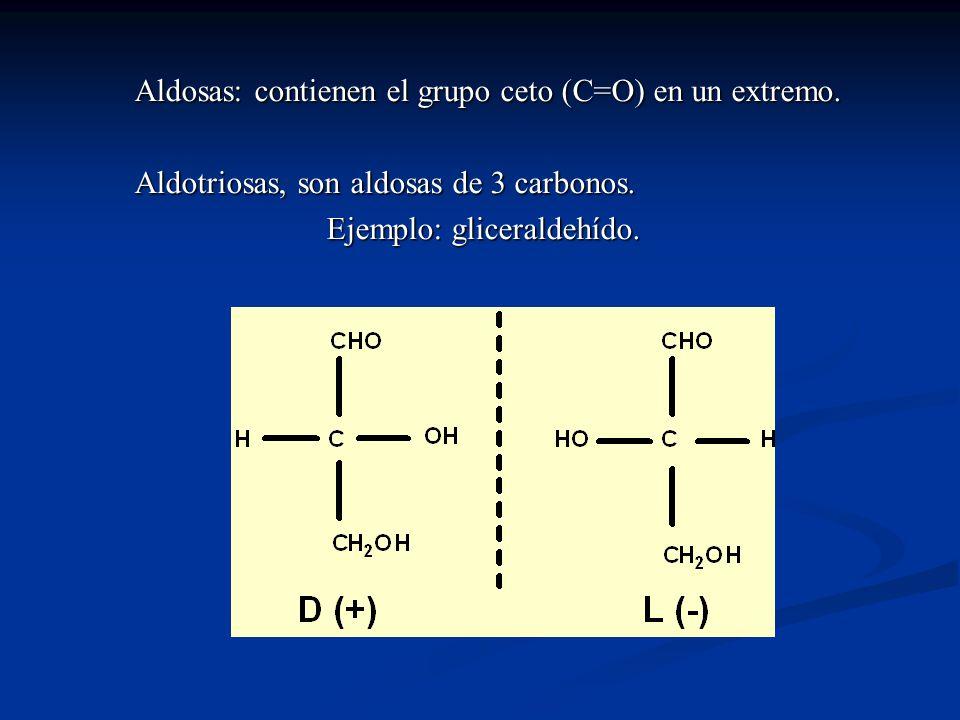 Aldosas: contienen el grupo ceto (C=O) en un extremo.