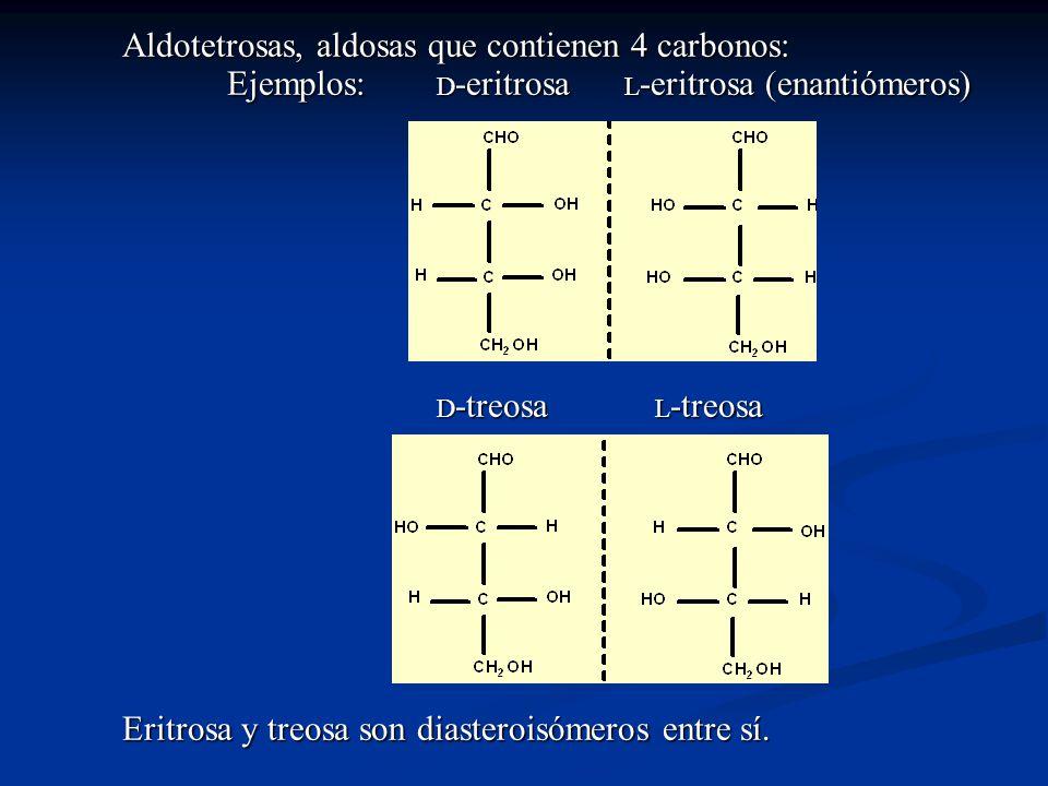 Aldotetrosas, aldosas que contienen 4 carbonos:. Ejemplos: