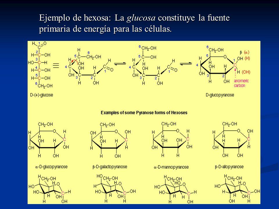 Ejemplo de hexosa: La glucosa constituye la fuente primaria de energía para las células.