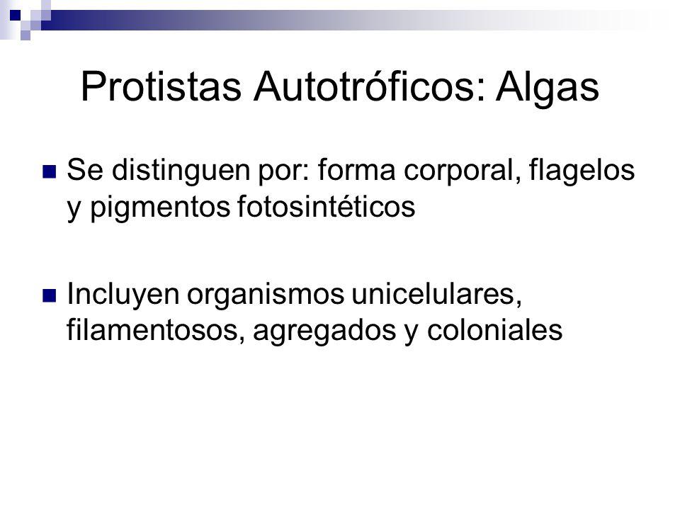 Protistas Autotróficos: Algas
