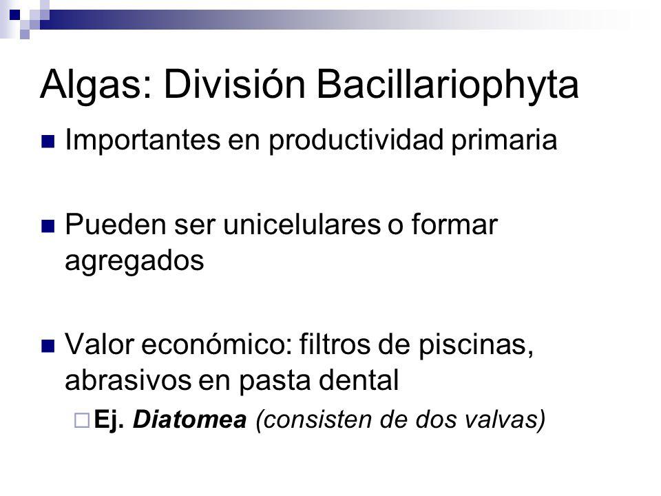 Algas: División Bacillariophyta