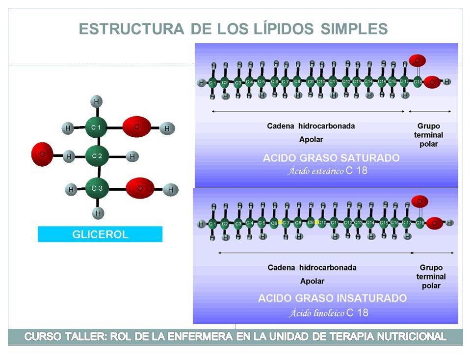 ESTRUCTURA DE LOS LÍPIDOS SIMPLES