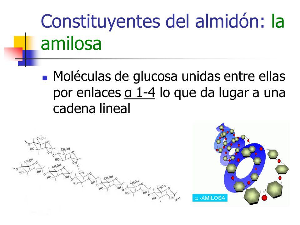 Constituyentes del almidón: la amilosa