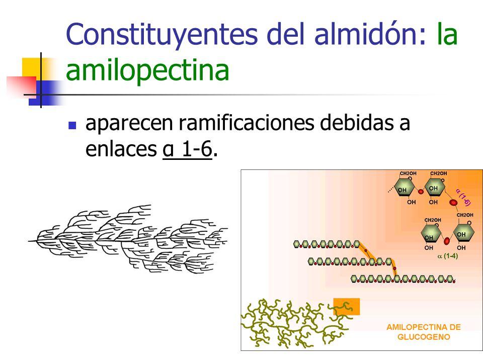 Constituyentes del almidón: la amilopectina