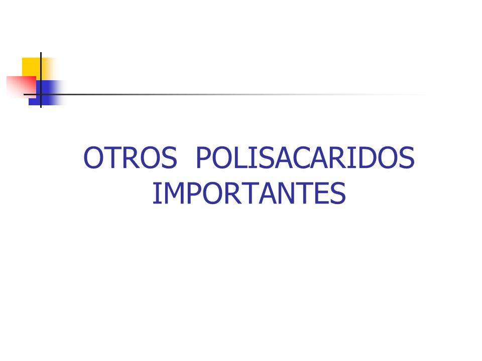 OTROS POLISACARIDOS IMPORTANTES