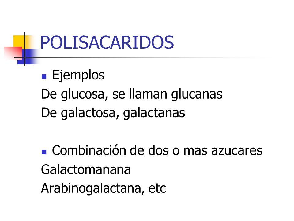 POLISACARIDOS Ejemplos De glucosa, se llaman glucanas