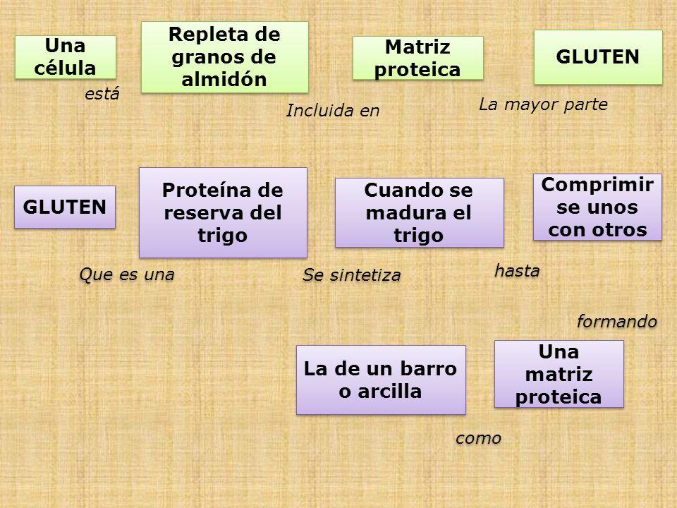 Repleta de granos de almidón GLUTEN Una célula Matriz proteica