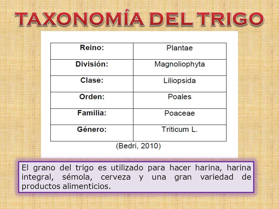 TAXONOMÍA DEL TRIGO